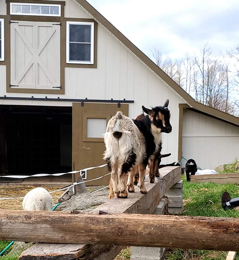 Farm Living
